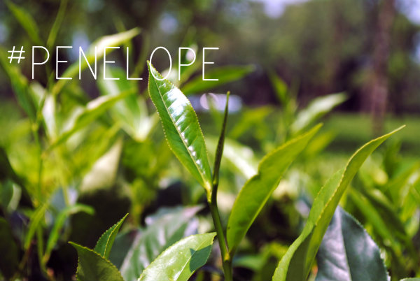 #Penelope:green factor